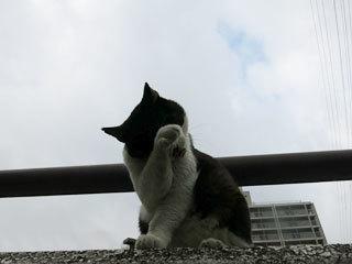 曇り空と猫