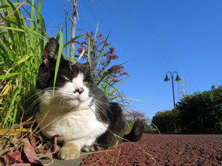朝の空と猫